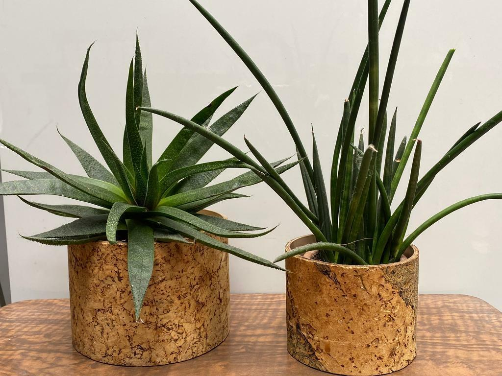 2x Vintage Cork Indoor Plant Pot Holder Retro Mid Century Boho Tiki In Tooting London Gumtree