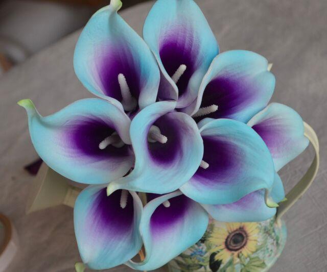 10 Picasso Light Aqua Purple Calla Lilies Real Touch