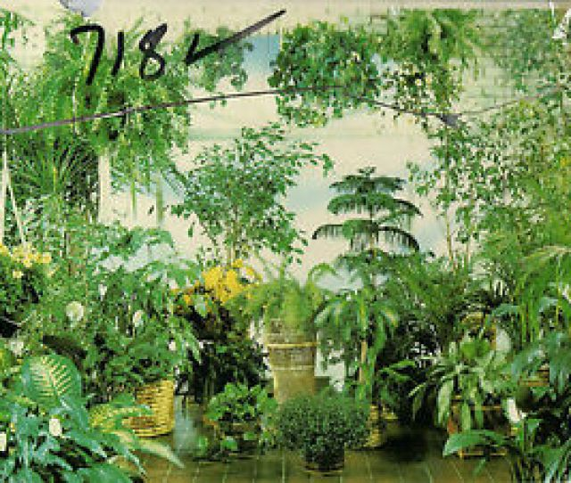 Image Is Loading Scenic Plants Wall Mural Florida Room
