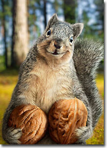 Squirrel Holds Nuts Funny Birthday Card Greeting Card By