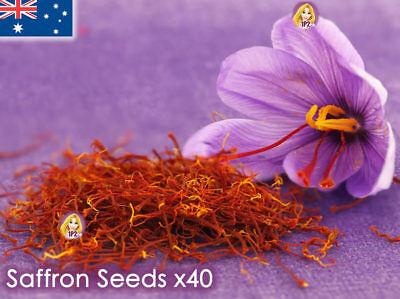 Saffron Crocus Sativus Seeds x40 Garden Flower Plant Seed ...