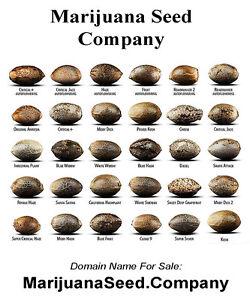 Image result for marijuana seeds