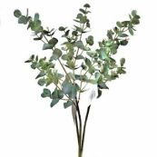Image result for eucalyptus stems