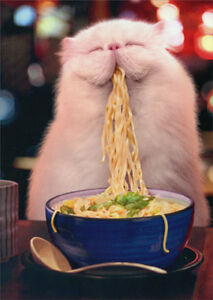 Cat Eating Steamy Noodles Funny Birthday Card Greeting