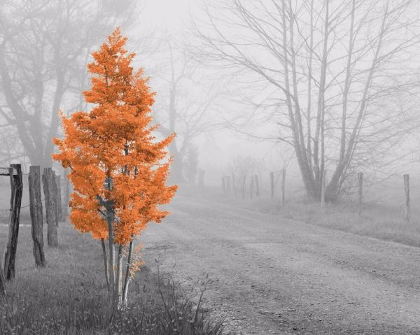 Orange Gray Home Decor Wall Art Photo Print Foggy Tree B&W ...