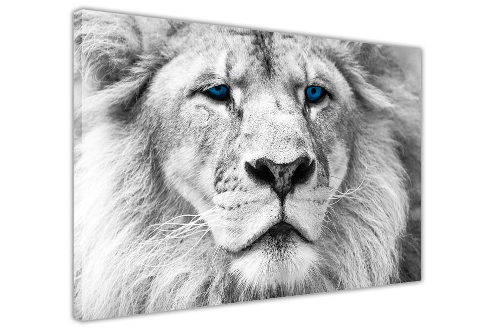 RARE WILD WHITE LION WITH BLUE EYES CANVAS WALL ART