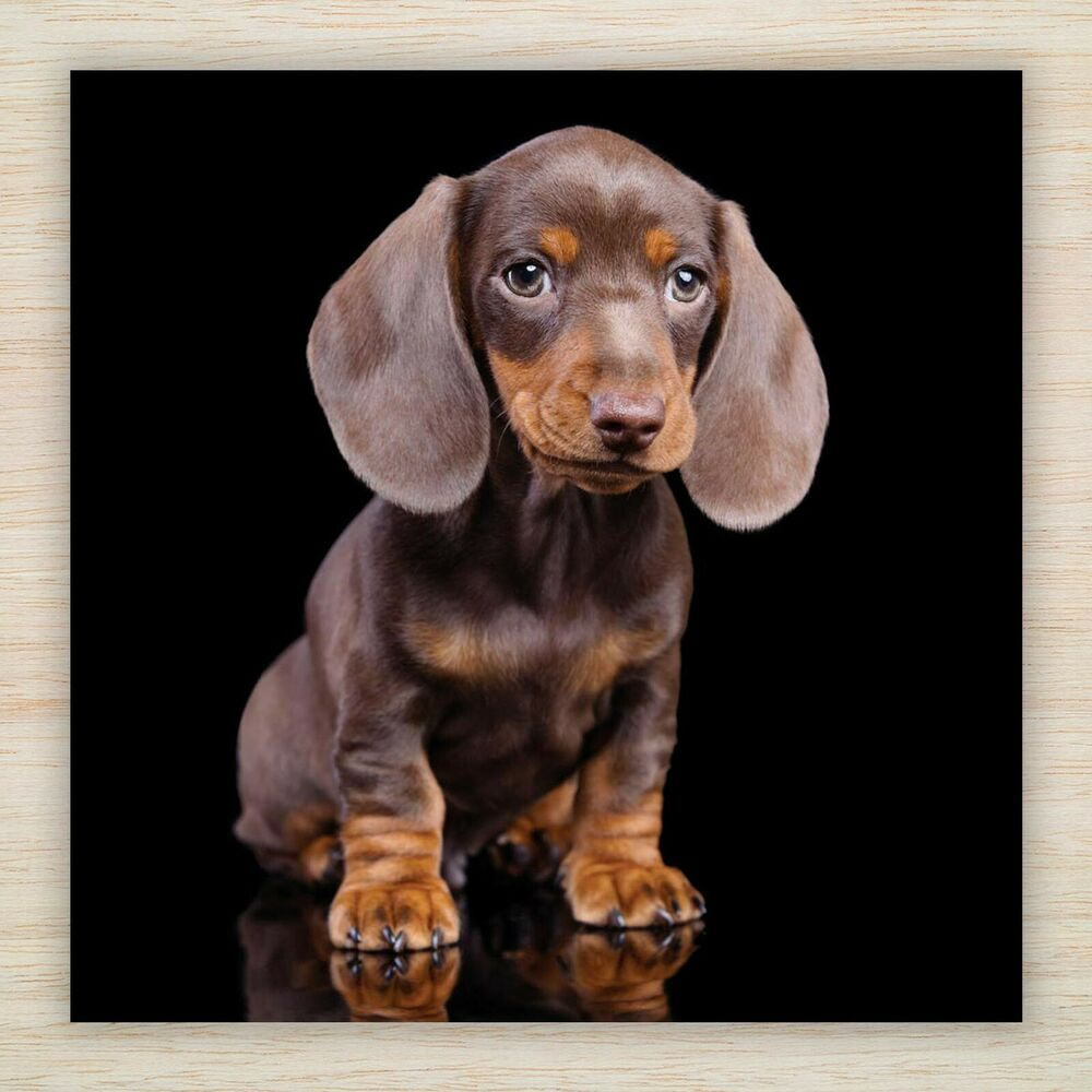 Dachshund Sausage Dog Puppy Selection Of Birthday