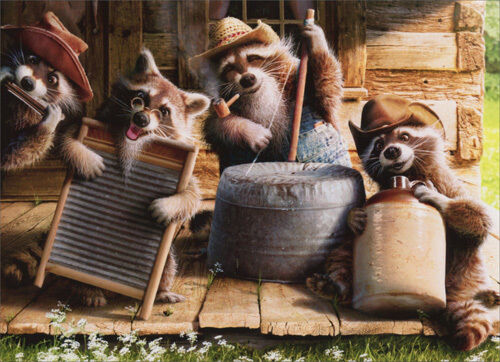 Raccoon Jug Band Funny Birthday Card Greeting Card By