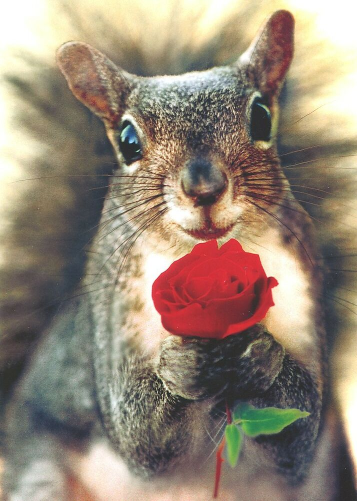 Squirrel Holding Rose Valentines Day Card Greeting Card