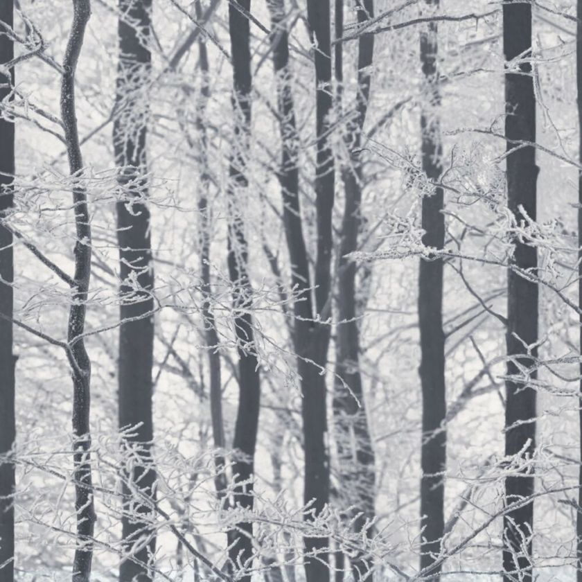 Arthouse Frosted Wood Glitter Black And White Silver Birch Tree Wallpaper  Ebay