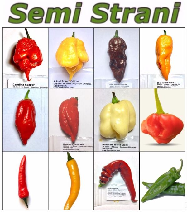 120 Seeds HOT CHILI PEPPERS Coll 3: CAROLINA REAPER ...