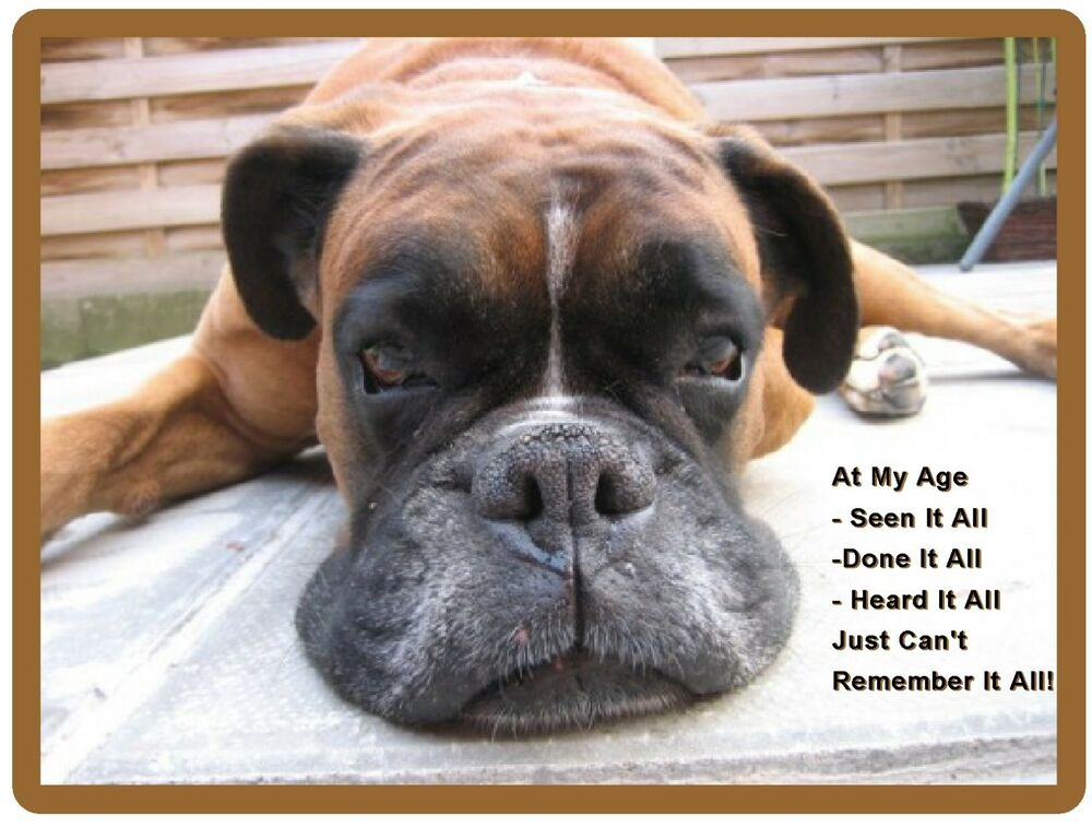 Funny Old Boxer Dog Forgetting Refrigerator Tool Box