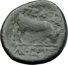 PELLA Macedonia Original 146BC Authentic Ancient Greek Coin ATHENA & BULL i62939