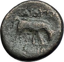 PELLA in MACEDONIA 146BC ROMAN Quaestor Ancient Greek Coin ATHENA & BULL i67856