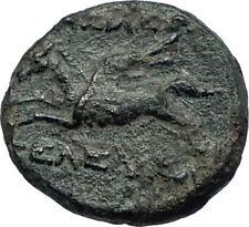 SELEUKOS II Kallinikos 246BC RARE R1 Ancient SELEUKID Greek Coin PEGASUS i68006