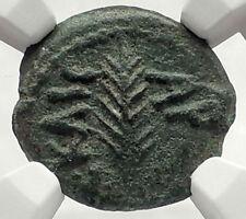 Biblical Jerusalem Saint Paul NERO PORCIUS FESTUS Ancient Roman Coin NGC i70853