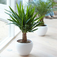 House Plants For Sale Ebay