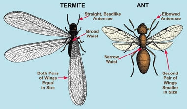 Essential Oils For Getting Rid Of Ants Eliminating Nature S Army Oil Benefits