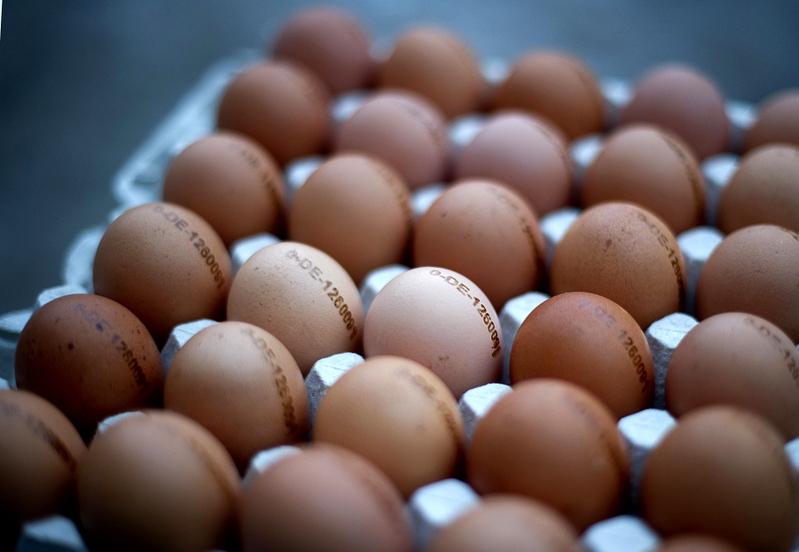 智能手機新用途: 辨認毒雞蛋   二惡英   大紀元