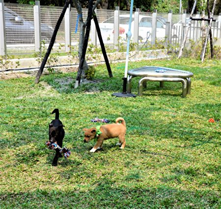 Taichung Animal House Houli Park is divided into dog and cat adoption and transfer space to the north of the dog and cat area, and a green pool is planned to allow puppies to have room for activity.