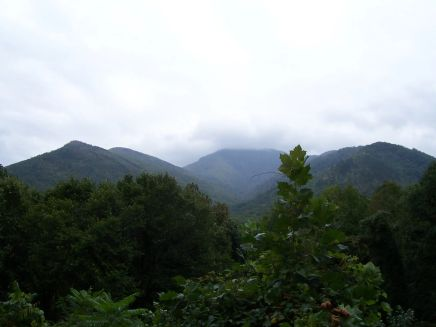 Mt. LeConte (6,593 ft, summit in clouds) from Carlos Campbell Overlook