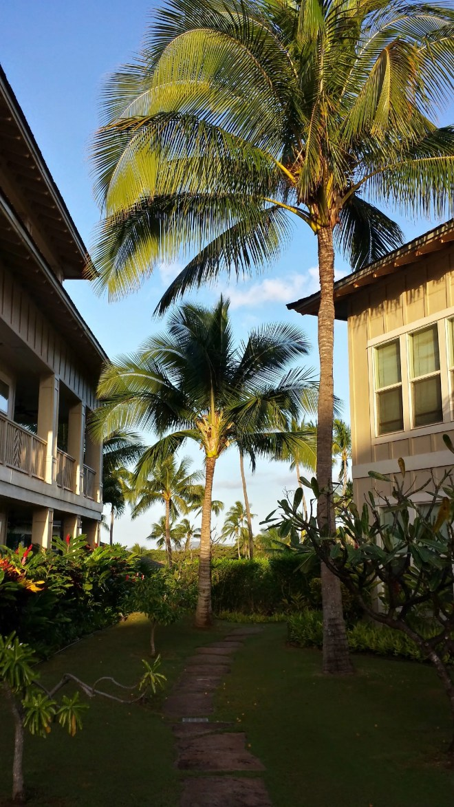 A morning amble about Kauai