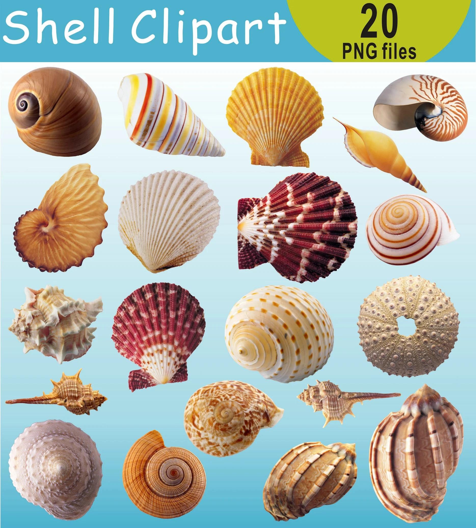 Seashell Clipart Shell Clip Art Under The Sea Shells
