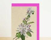 Cherry blossom spring flo...