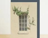 Window and ivy architectu...