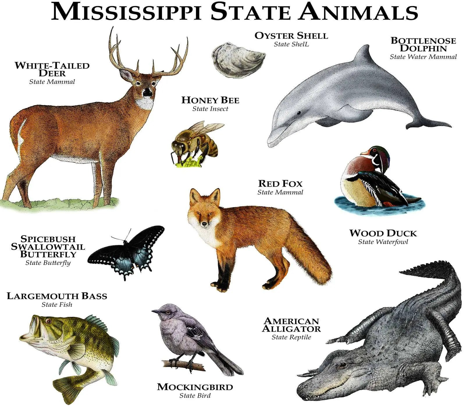 Mississippi State Animals Poster Print