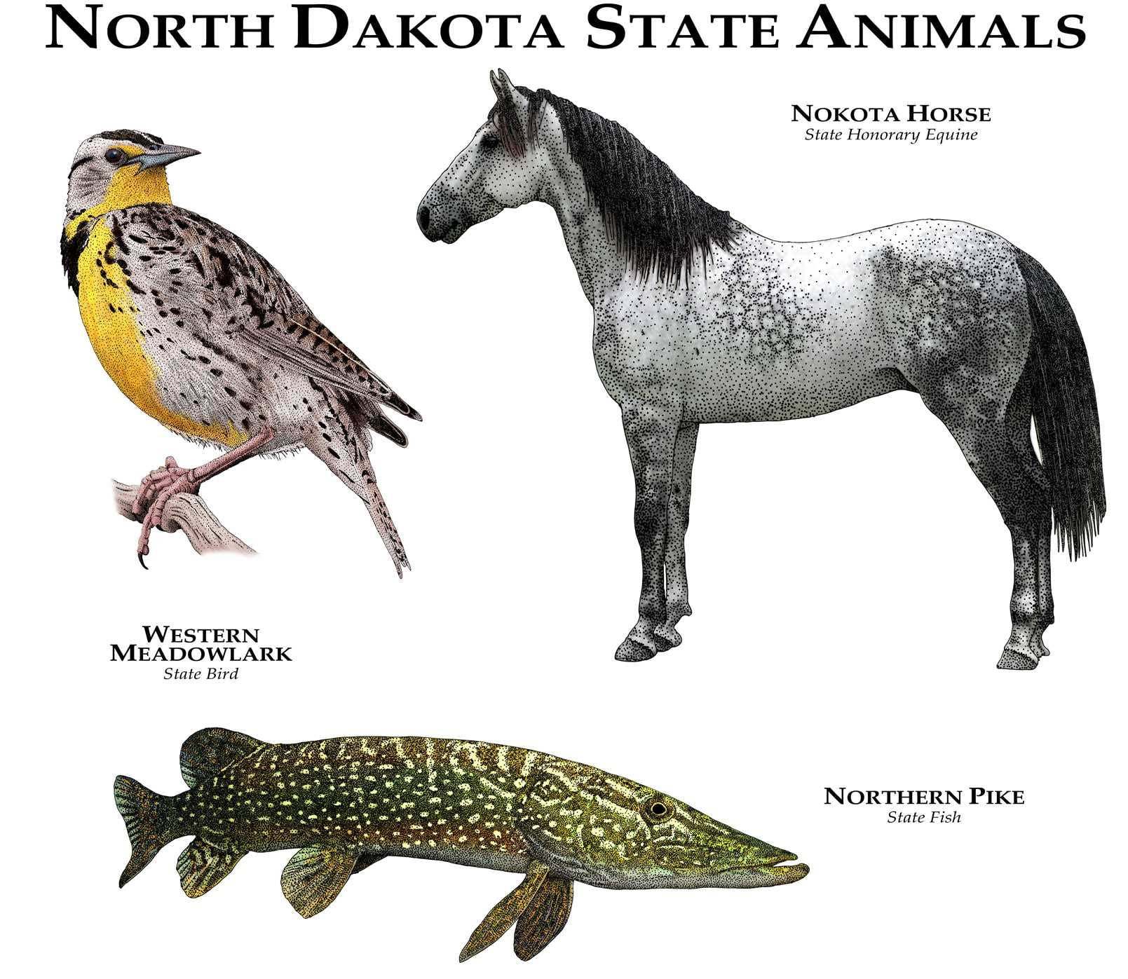 North Dakota State Animals Poster Print