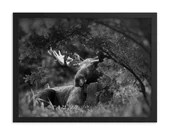 Autumn Moose // Framed poster