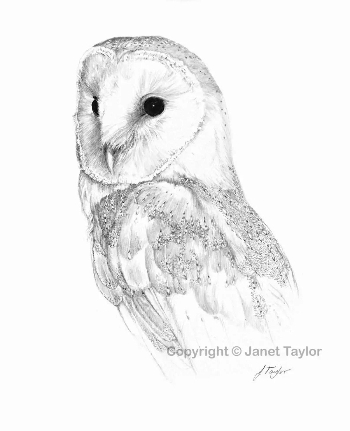 Barn Owl Drawing Print Of Original Graphite Drawing By Jan