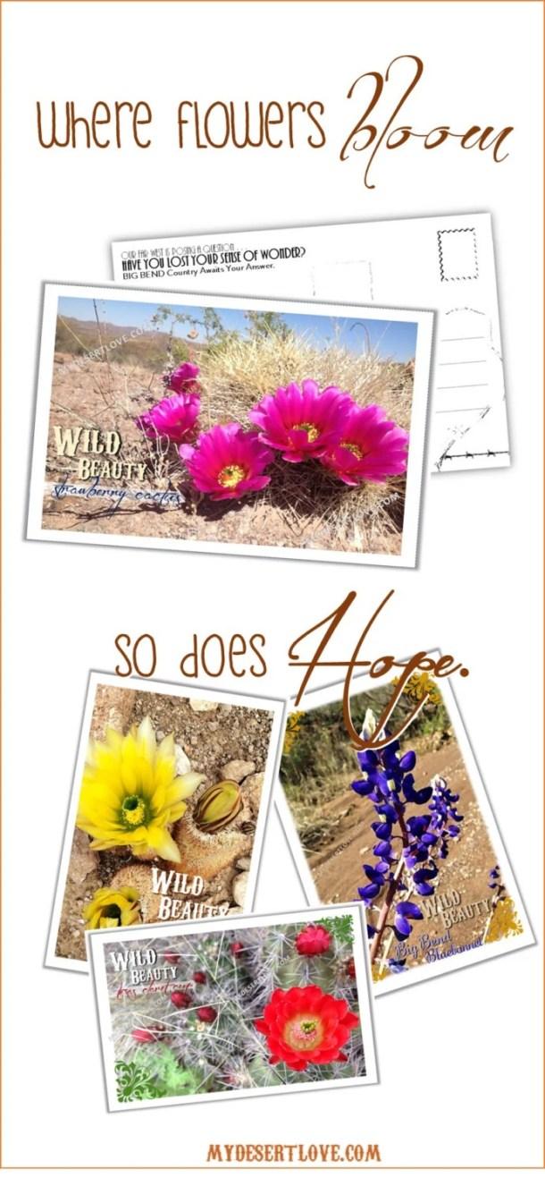 Strawberry Cactus Wild Bl...
