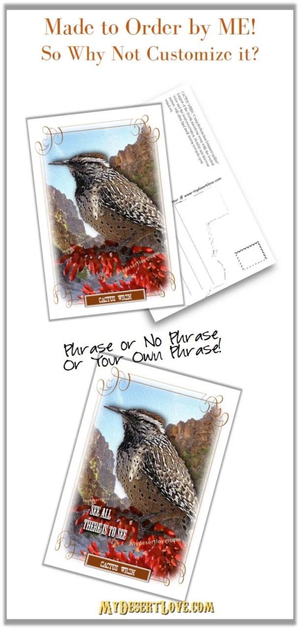 Wildlife Photo Postcard, ...