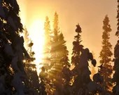 "Winter Sunrise - 5""x10"" Float Metal Print"