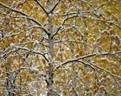 Autumn's Winter - Lustre or Metal Print