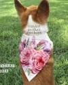 Dye Sublimation Pet Bandana Mockup Template Add Your Own Etsy