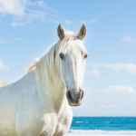 White Horse Print Horse Wall Art Horse Decor