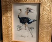 Ostrich, original Illustr...
