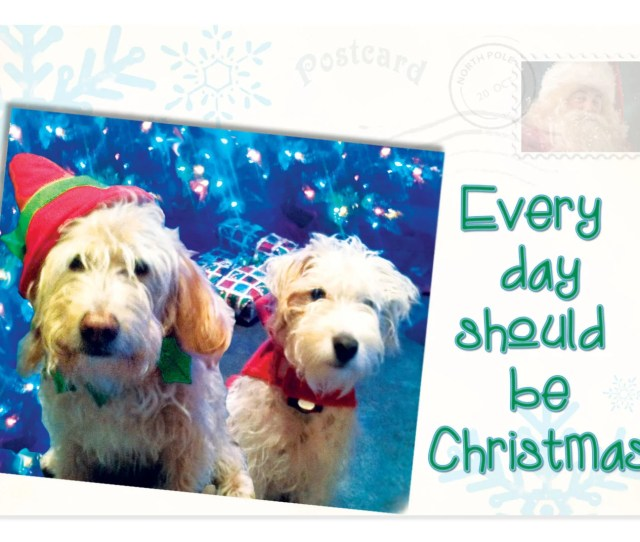 Eco Friendly Greeting Cards Funny Christmas Cards Dog Christmas Cards Cards Donate To Charity Pet Christmas Card Rescue Dogs