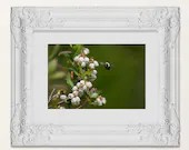 Bee by Blueberry Blossoms - Blueberry Fruit Tree Wall Art, Floral Blueberry Kitchen Decor Photography Busy Bee Berries in Bloom