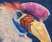 Knobbed Hornbill - Original Framed Drawing in Coloured Pencil