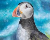 The Cliff Sentry - Original artwork of a photorealistic puffin in coloured pencils by Wild Portrait Artist, 14.8 x 21cm (A5)