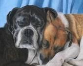 Custom pet portrait artwork in coloured pencil