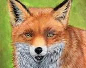 Sly Mister Fox - original...