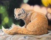 Basking Mongoose - 11 x 14 inches, Original painting in pastel pencils by Wild Portrait Artist