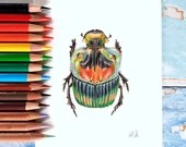 Scarab Beetle Original Art in coloured pencils, A6-size realistic drawing, scientific insect illustration - sulcophanaeus imperator