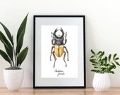 Stag Beetle Giclée Art Print,  - A4 size coloured pencil drawing, scientific illustration of a male Odontolabis femoralis