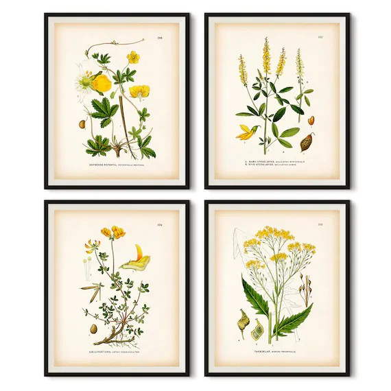 Yellow Botanical Wall Art Vintage Botanical Print Instant Etsy